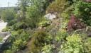 rock_garden.june.jpg